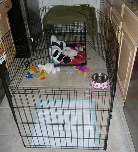 Crate Training your Puppy - French Bulldogs Crate Training