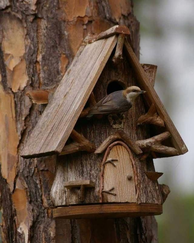 Image Result For Hollow Log Bird Houses For Sale Unique Bird Houses Bird House Kits Bird House