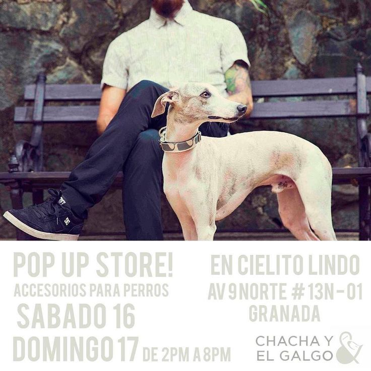 Este fin de semana podrás conocer la nueva colección de accesorios de @chachayelgalgo en @cielitolindoco  Te esperamos para que parches con tu perro, lo consientas con nuestros productos hechos localmente y para que coman paleta los dos!! #PerroFeliz #chachayelgalgo #paletasparaperros #amorperruno #mascotas #peluditos #petfriendlycali #cumpleañosparaperros #YoCreoEnCali #cali #calico #colombia #cielitolindo #popupshop #perros #dogfriendly #color #fun #style #like #love #yocreoencali