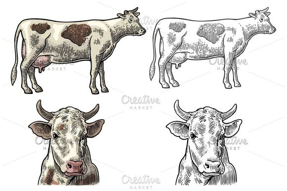 Cow head and figure  @creativework247