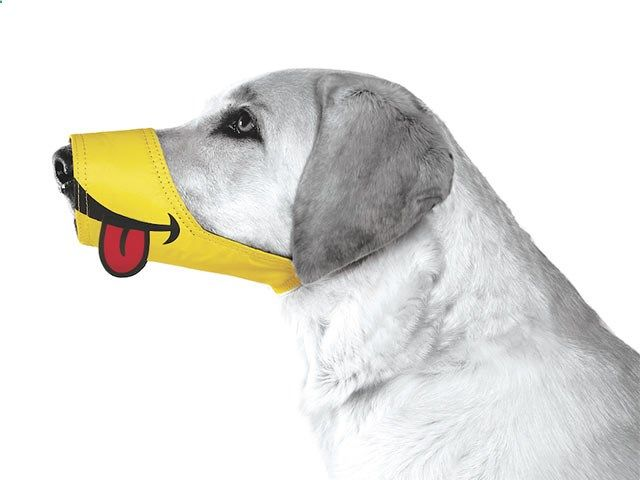 Smiley Muzzle from the Funny Muzzle Collection by Cesar Millan. Dog muzzles dont have to inspire fear!