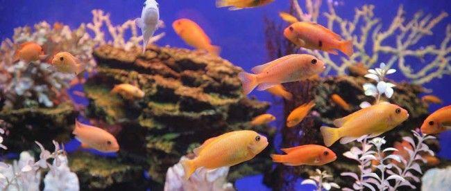 Best 25 55 gallon aquarium ideas on pinterest best for How often do you clean a fish tank