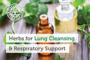 Top Herbs That Are Great for Lung Cleansing