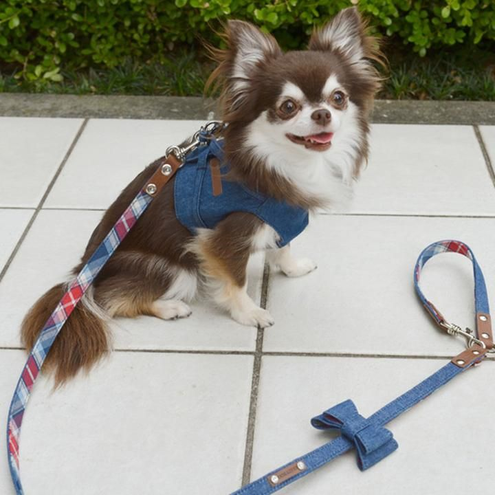 Rope Leather Harness Cute Dogs Puppies Cute Dogs Dog Leash