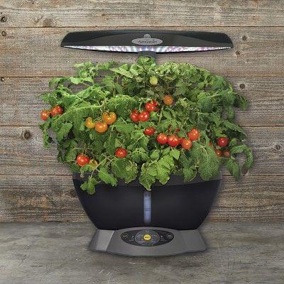 Aerogarden 6 Pod Heirloom Cherry Tomato Seed Kit Seed 400 x 300
