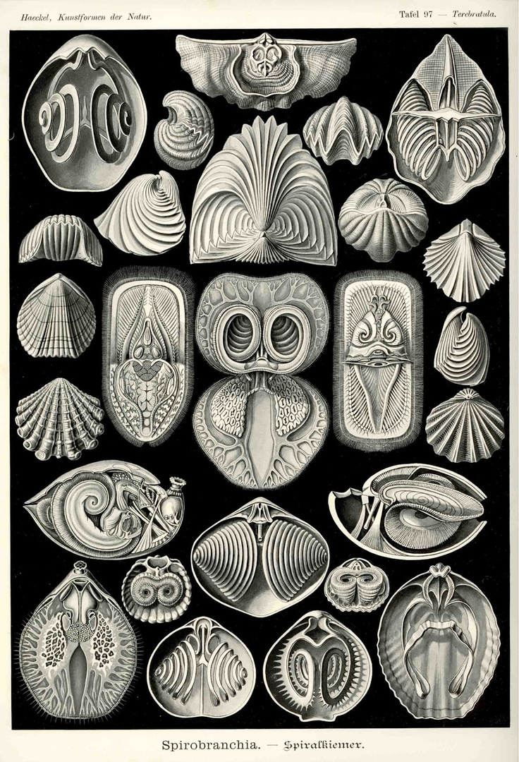 "Prints and Principles: Haeckel: 10 ""Rules"" of Composition (Part 1)"