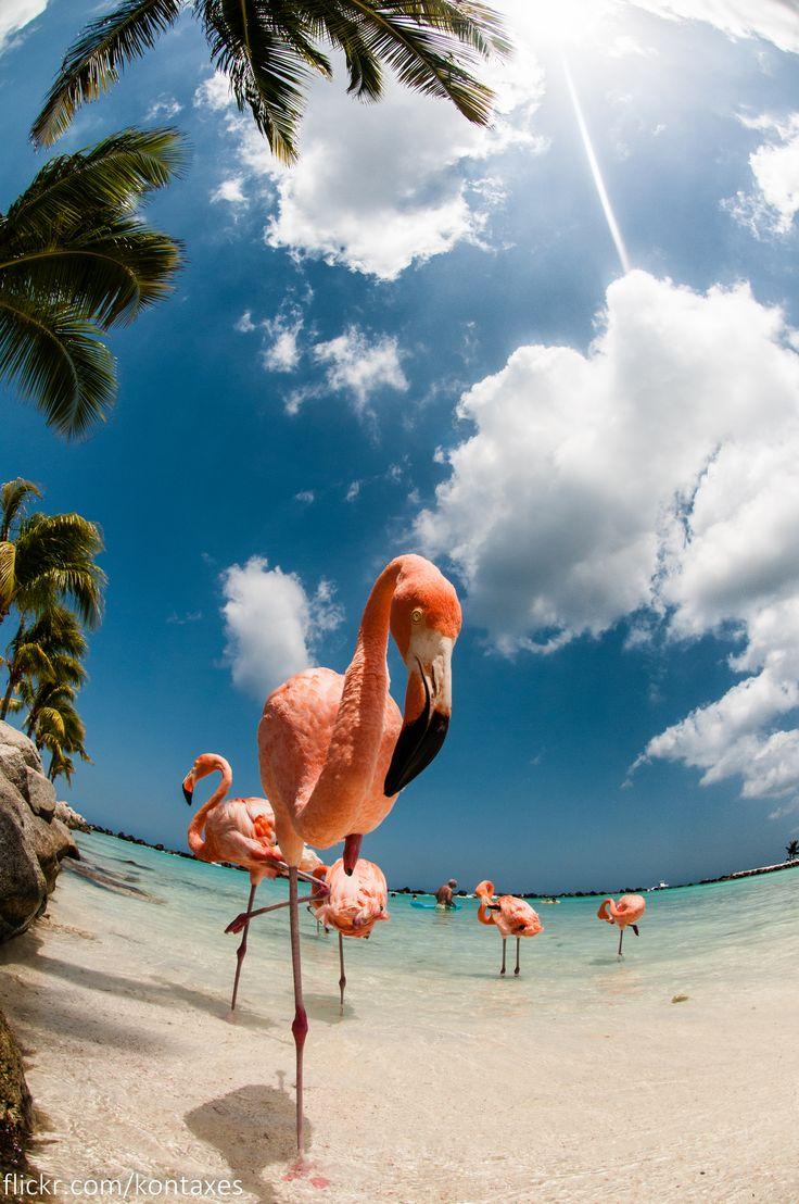 Renaissance Insel, Aruba Entspannen mit den pinken Flamingos der Insel. Den passenden Koffer für eure Reise gibt es bei uns: https://www.profibag.de/reisegepaeck/