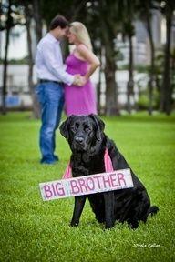"""Hund """"großer Bruder""""   – Schwangerschaft  bekanntgabe – #Bekanntgabe #Bruderquo…"""