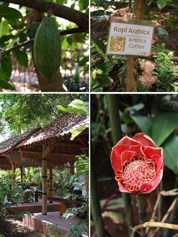 Civet Coffee - Kopi Luwak - Tasting & Visiting Teba Sari Farm in Bali, Indonesia - Article