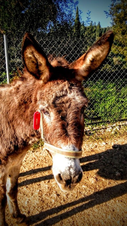 Siska from Corfu Donkey Rescue
