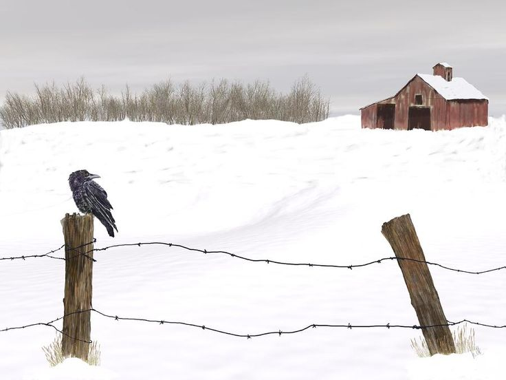 Raven In Winter Painting  - Raven In Winter Fine Art Print