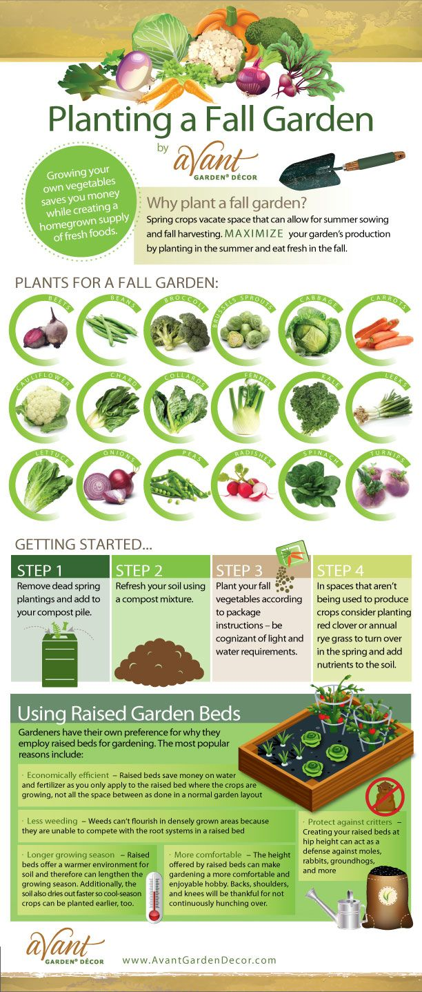 Vegetable garden graphic - Planting A Fall Garden Step By Step