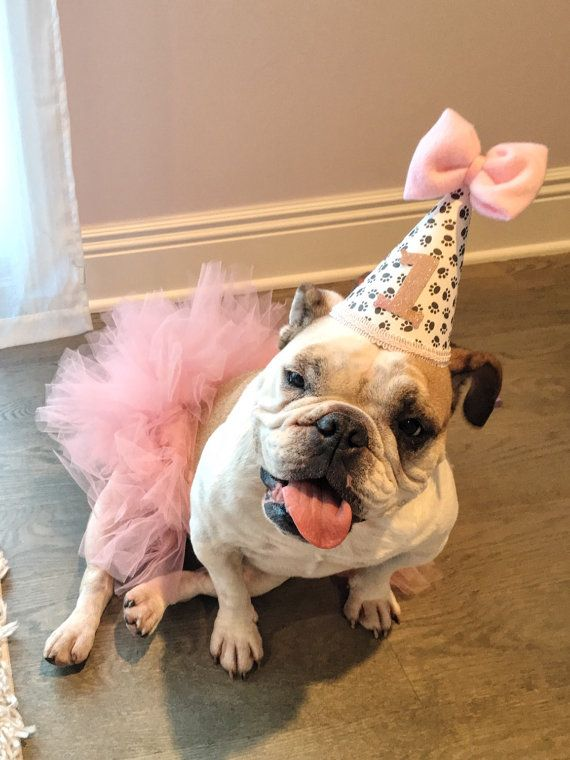 The 25 Best Dog First Birthday Ideas On Pinterest Party