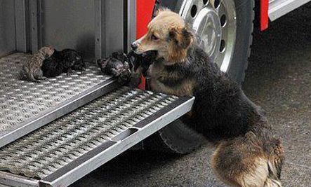 Heroic Mother Dog Saves Puppies from Fire (Photo)