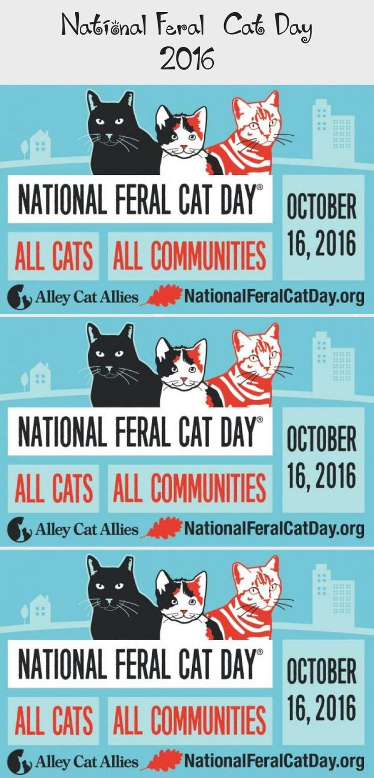 National Feral Cat Day 2016 in 2020 (With images) Cat