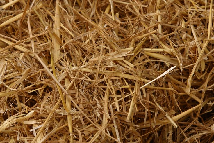 A thin layer of straw keeps grass seed in place and sufficiently moist and warm until it germinates and establishes a root system to anchor it to the soil.