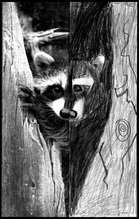 I often find that if students have an image to look at when they draw, they tend to surprise themselves in what they can do. 1. I used the internet to find animal photos that had a variety of shadows. After downloading the image and turning it black and white (thanks Photoshop!) I cropped it right … Read More