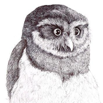 Wide Eyed Owl - Kate Morgan - Artist & Illustrator
