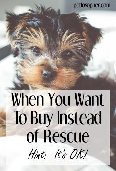 #dogs #dogbreeders #puppy #puppybreeders | When You Want to Buy Instead of Rescue | Rescue vs Breeder | Breeding Dogs