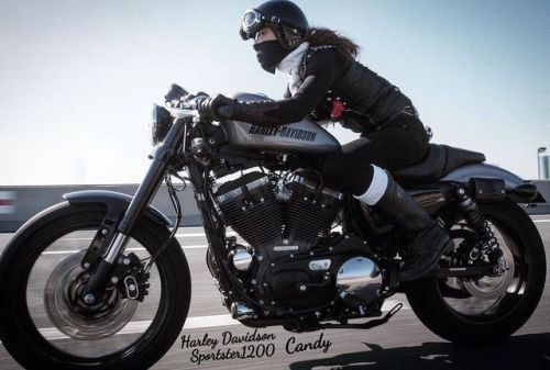 Kallistos Stelios Karalis⊱✿⊰LUXURY Connoisseur ⊱✿ ⊰caferacerpasion.com  Harley-Davidson #CafeRacer and Cafe...