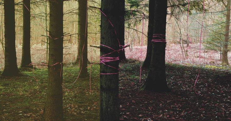 Grass is greener on the other side,Woods, art photography