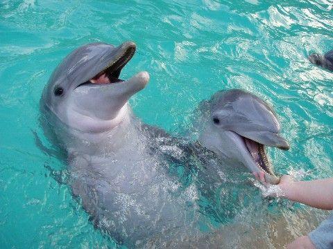 Há uma luz no pôr do sol! Companhia aérea americana se nega a transportar golfinhos para cativeiros.