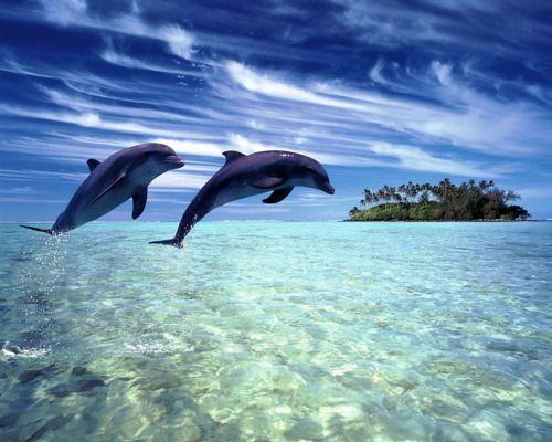 "Palm Cove Paradise ""Queensland Australia"""