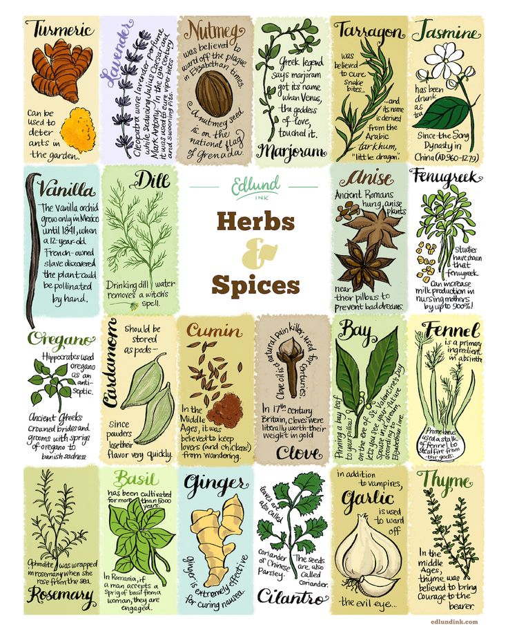 Herbs and spices have a long and storied history—this print provides just a dash of the facts, flavour and folklore. Illustrations and text by Bambi Edlund. Museum-quality poster printed on thick, arc