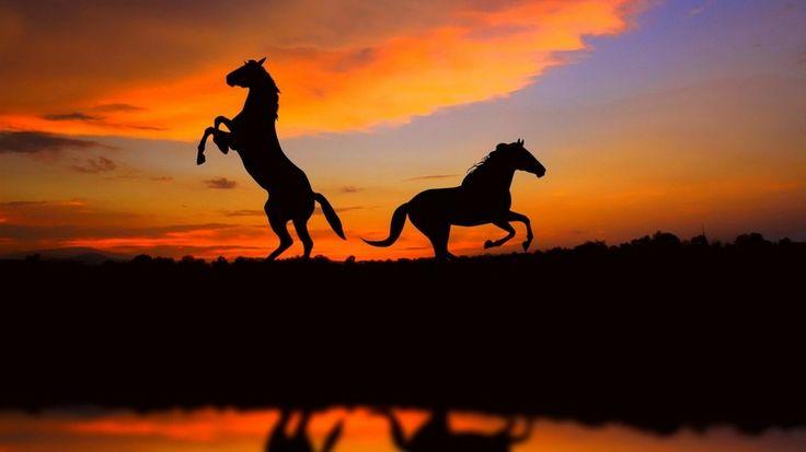 Doğal Ortamlarında Vahşi Atlar