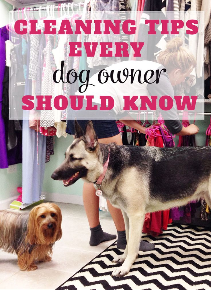 CLEANING TIPS EVERY DOG OWNER SHOULD KNOW. Good household tips and tricks.