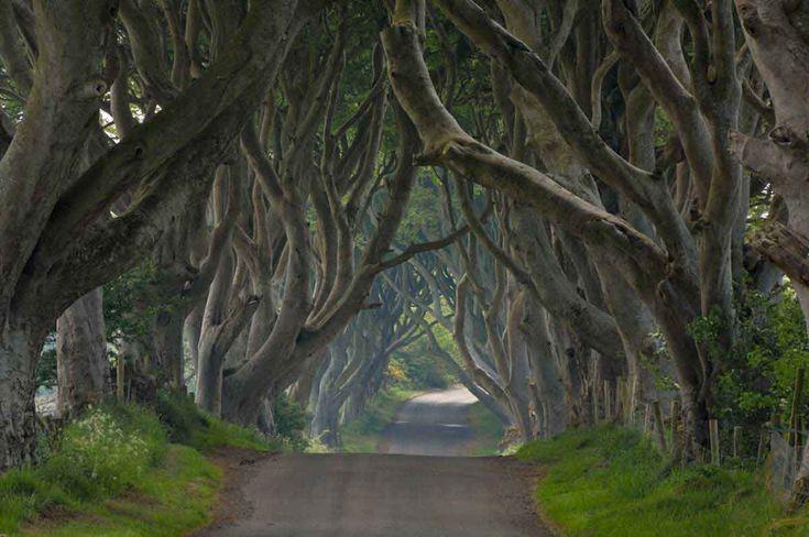 Dark Hedges, Irlanda del Norte - Bosques del mundo que parecen encantados