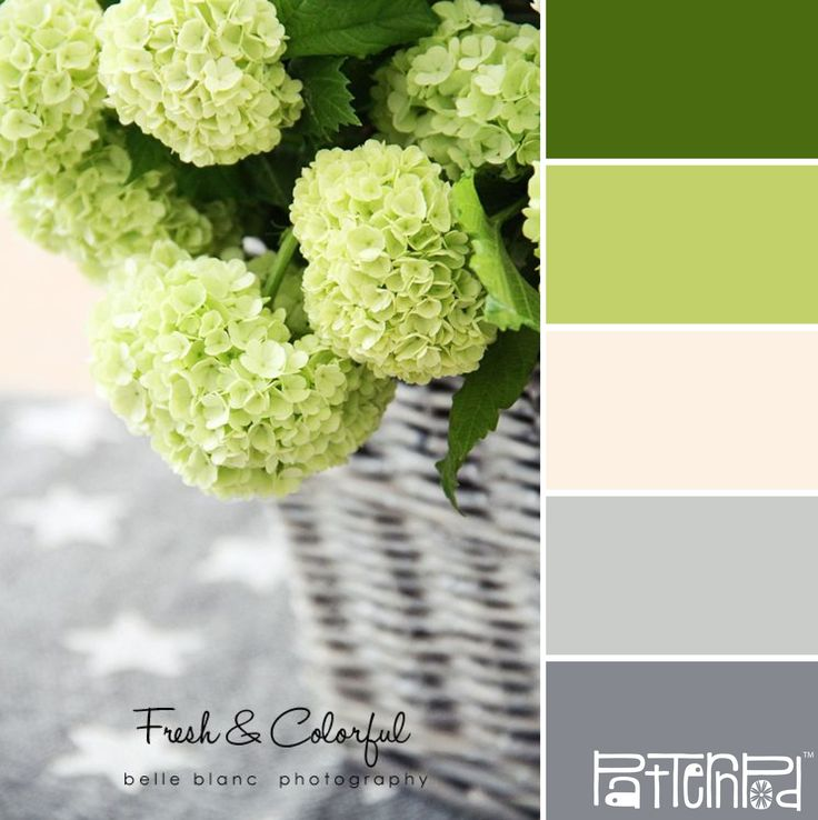 Down Stairs color scheme. Middle color for cabinets in kitchen. Grey walls of living room and dining room. Middle white for wainscoting in dining. Green bathroom.