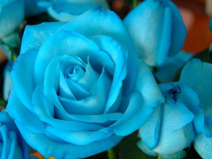 Rosas Azules | Rosas Azules : Lorena Pacheco : Ebook Tour
