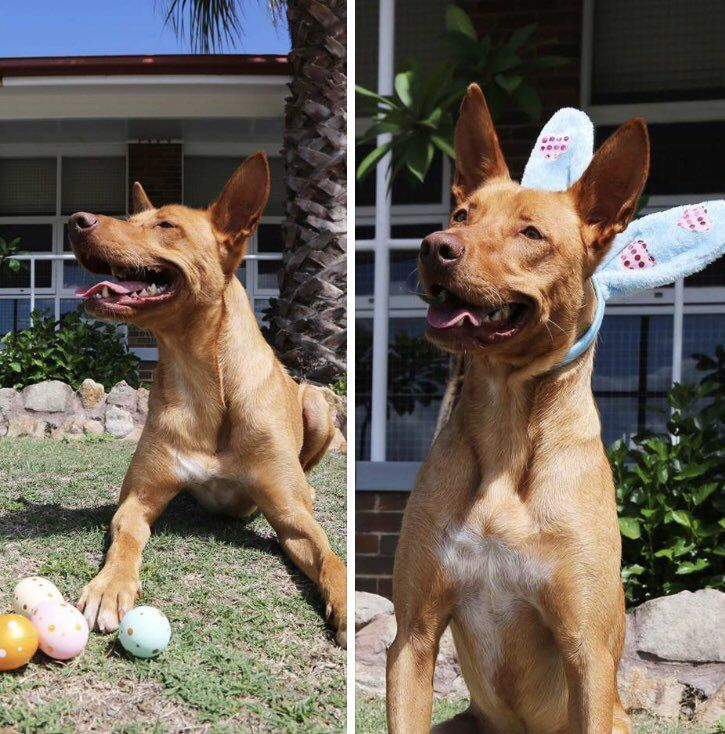 Happy Easter And Have A Safe Long Weekend From Burt The Drug Detection Doggo Everyone At Corrective Services Nsw Thanks To All The Officers Who Will Sacrif Long Weekend Thankful Sacrifice