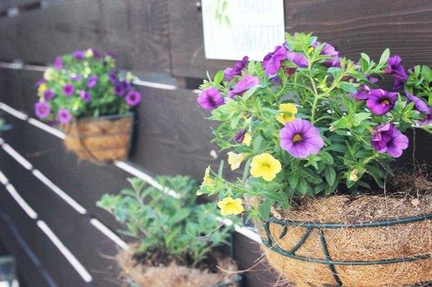 ハンギング プランターの花を植え替えました  元気よく育ってくれますように