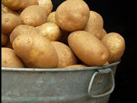 6. Выращивание картофеля. Технология изобилия урожая (по методу Миттлайдера) 2 - YouTube