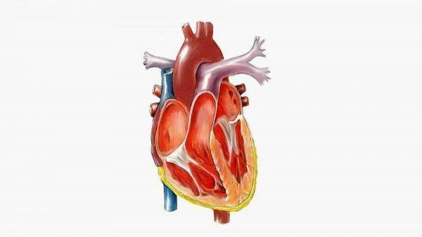Sydämen toiminta