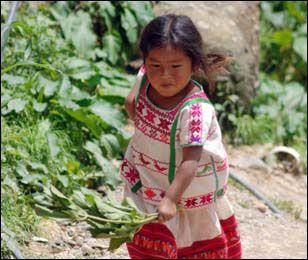 En 2012 Sederec incrementará apoyos económicos a niños indígenas   Bienvenidos