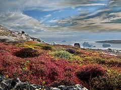 """bioma tundra:De significado """"llanura sin árboles"""", la tundra es el bioma más frío del planeta.La tundra se ubica principalmente en el hemisferio norte de la Tierra."""