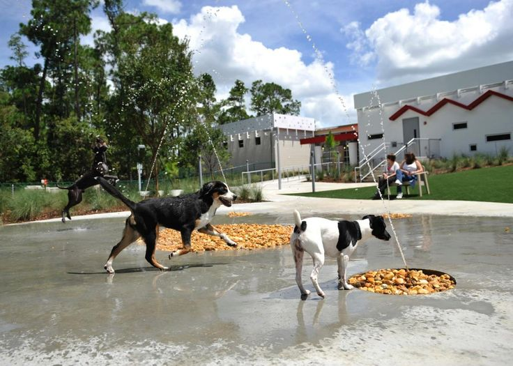 100 best pet resort ideas images on pinterest dog pond for Dog kennels near disney world