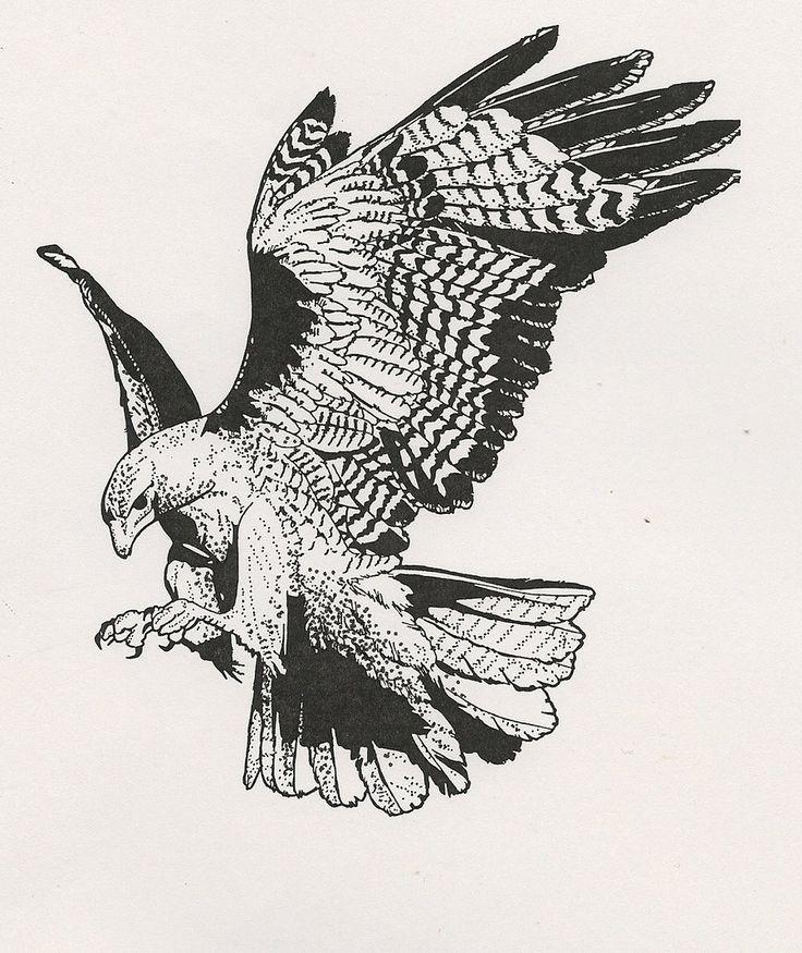картинки орлов и ястребов черно белые качестве домашних