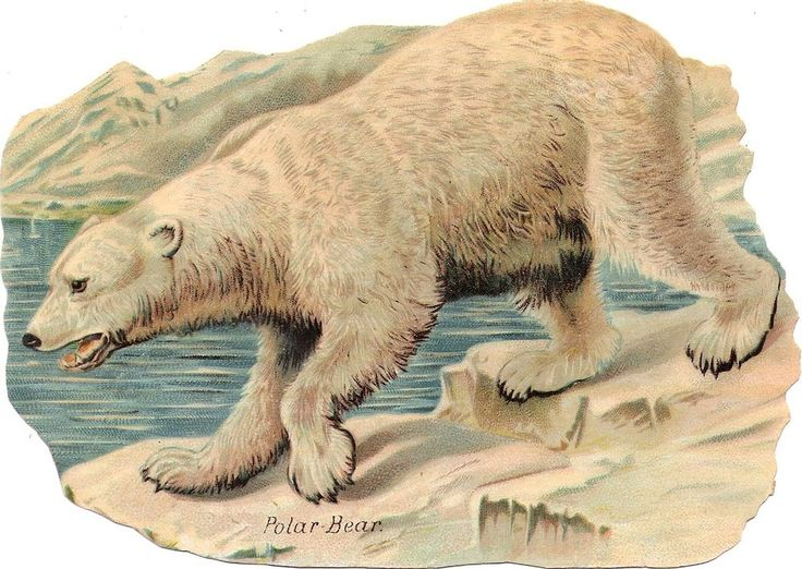 Oblaten Glanzbild scrap die cut  chromo  Eisbär icebear  XL 17,5 cm  Polar bear
