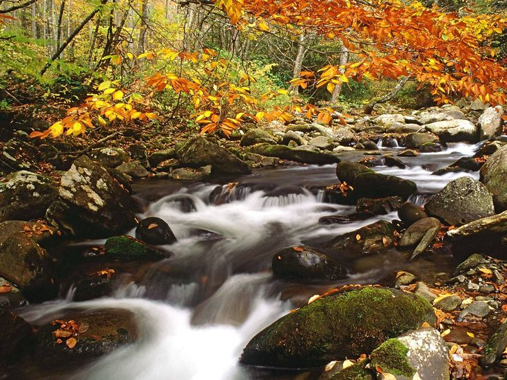 Fall Leaves Falling Wallpaper Autumn In The Smokey Mountains Laurel Creek In Autumn