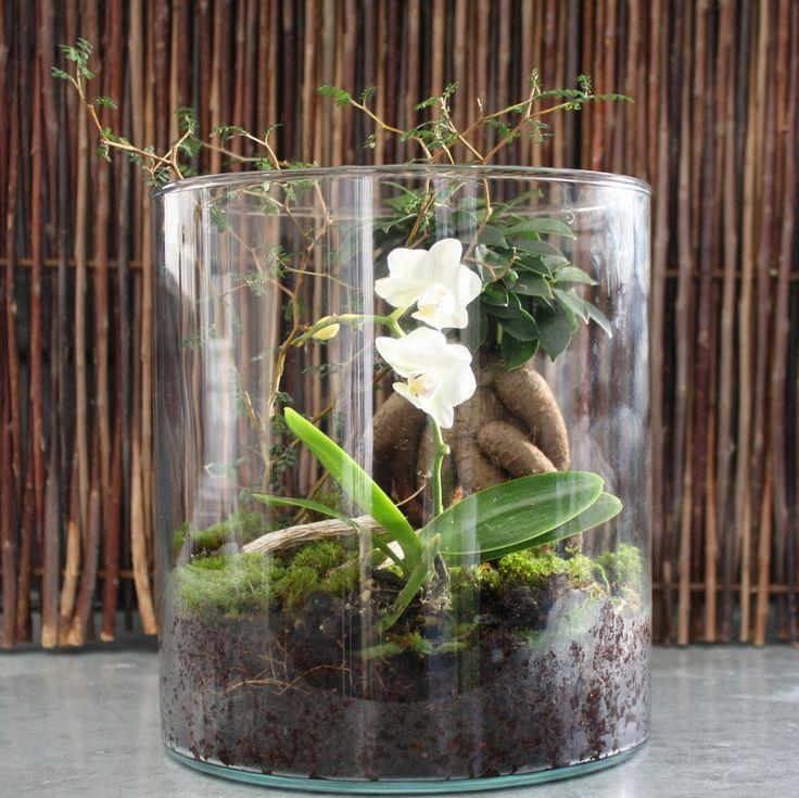 REGNSKOV UNDER GLAS - DIY-miniature-garden