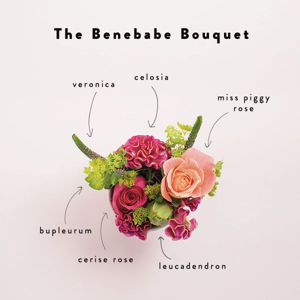 Our Benefit bouquet has some of our favourite blooms inside. Here's a mini posy that deconstructs the blooms! xx
