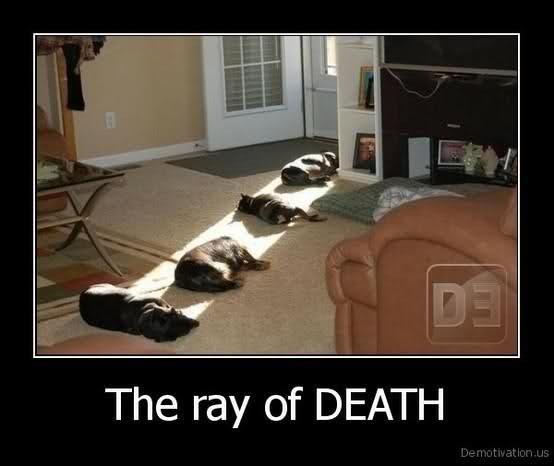 Ray of death. <3 Animals