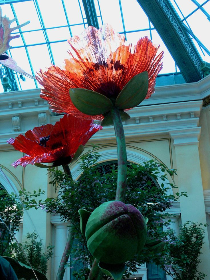 blooming glass poppies from dale chihuly glass by andrea wiggins