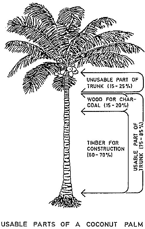 palm tree root system diagram