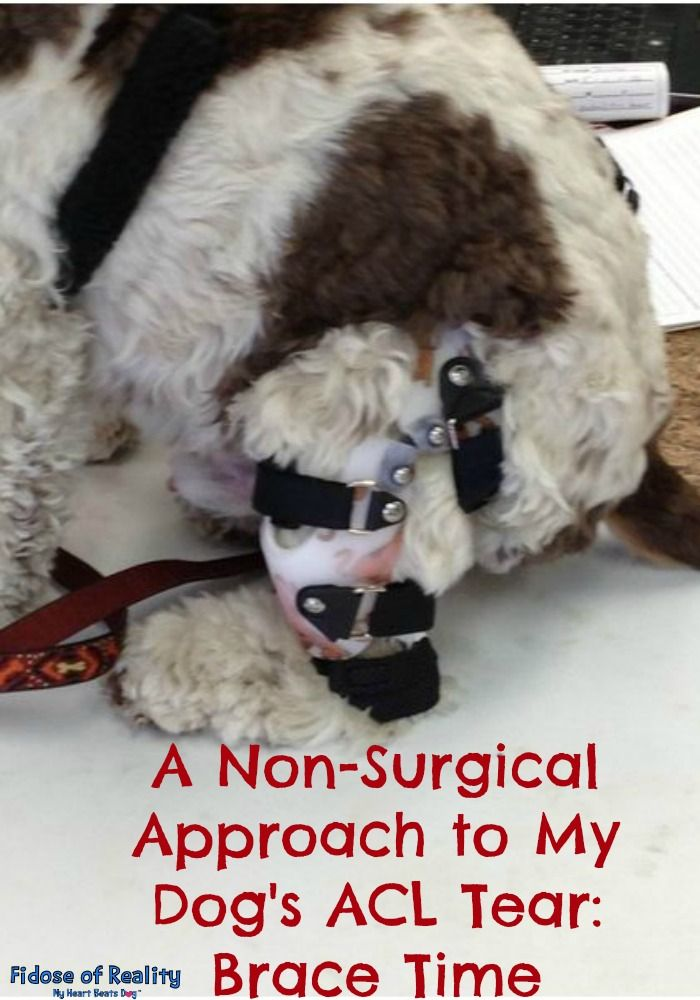 A Non-Surgical Approach to My Dog's ACL Tear: Brace Time - Fidose of Reality