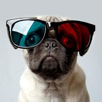 3D pug. I tried to put sunglasses on Lulu once for a picture, she would not have anything to do with them!